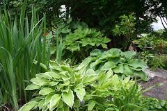 Grønt hjørne i hagen