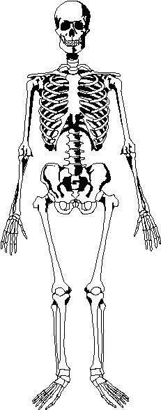 esqueleto humano dibujos:
