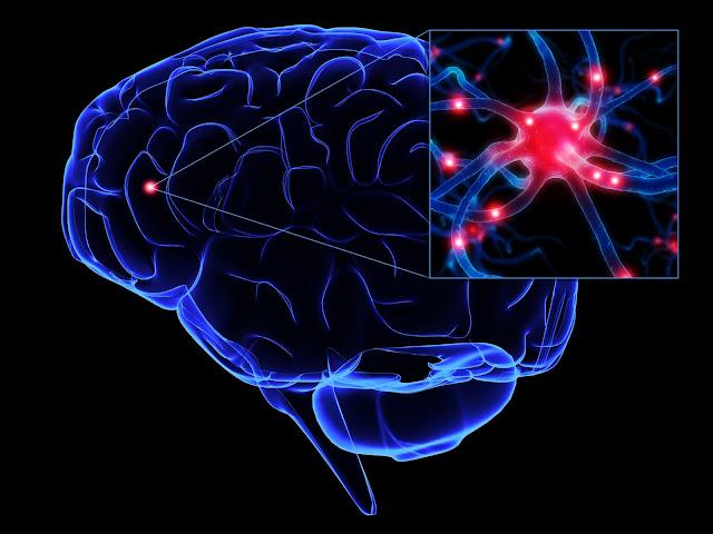 ¿A qué edad empieza a decaer nuestro rendimiento cerebral?