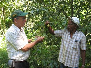 Cultivo de pimienta