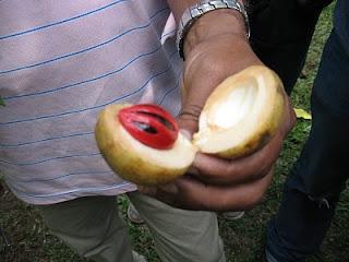 Nuez Moscada