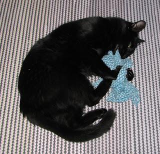 Miro-kissa tiskirätin kimpussa