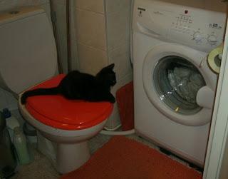 Miro vahtimassa pesukonetta