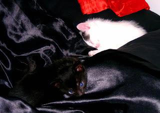Miro ja Mila ihan pikkuisina