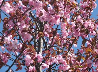 Pinkit puut 2