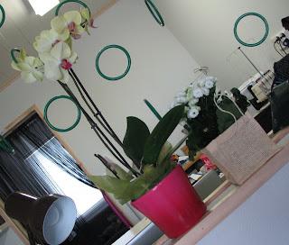 kukkia 1