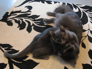 Lilli ja emo