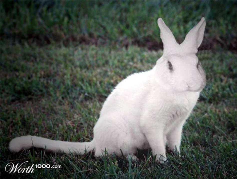 2006 arctic cat m7