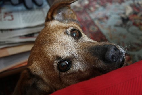 Każdy blog ma swojego psa.
