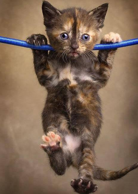 Hang in There Cat Wallpaper Download