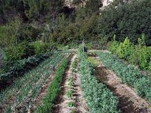 GRUPOS DE CONSUMO AGROECOLOGICO