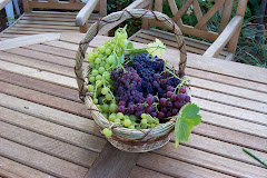 Fruit in the basket