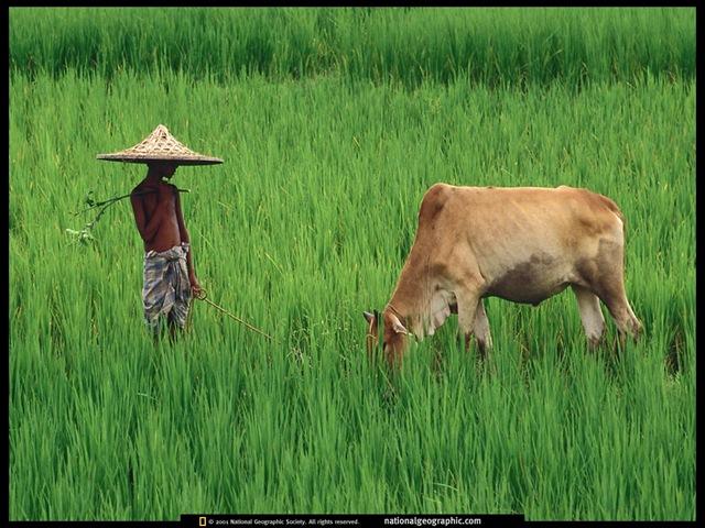 Bangladesh Natural Beauty