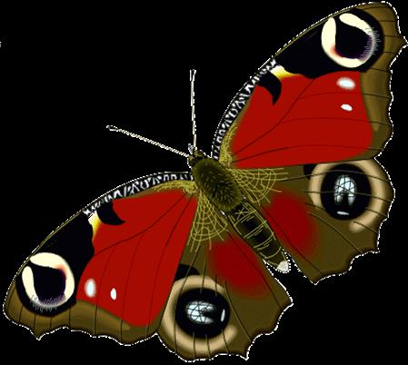 kupu kupu kupu kupu dan ngengat rama rama merupakan serangga yang ...