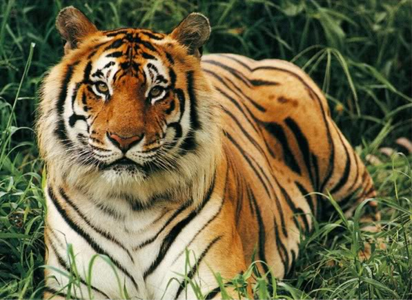 Animals In Endangered: List of Endangered Animals in India