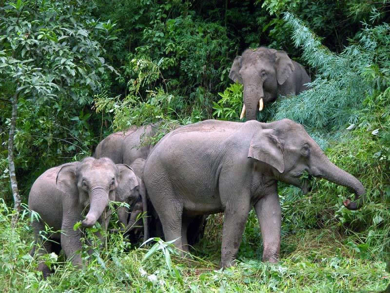 Animals in endangered list of endangered animals in india