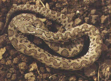 .......ma soprattutto attenzione ai serpenti...........