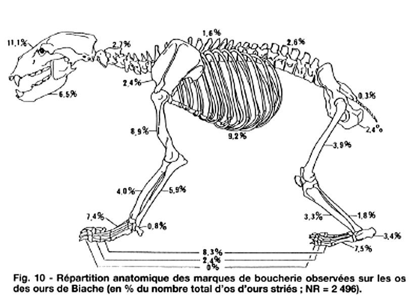 Excepcional Anatomía De Oso Pardo Modelo - Anatomía de Las ...