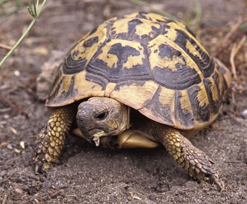 Baby Herman Tortoise Food