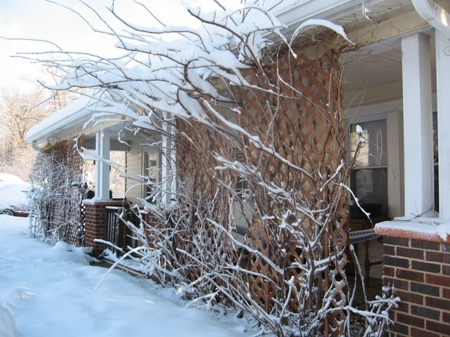 [snowstorm.jpg]