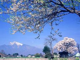 日本鄉野-11