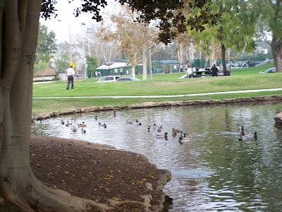 Ducks at Tewinkle Park