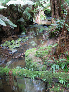 Madsens Track Nature Walk   Melba Gully   Great Otway National Park   Lavers Hill   Victoria