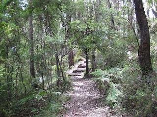 Messmate Walking Track - Dandenong Ranges National Park - Victoria