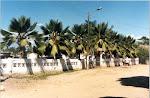 foto del cementerio de palo de agua