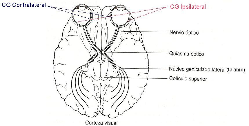 Psicología de la Percepción - UCM: Visión