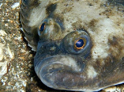 Every one a poet one eyed fish 39 s love for One eyed fish