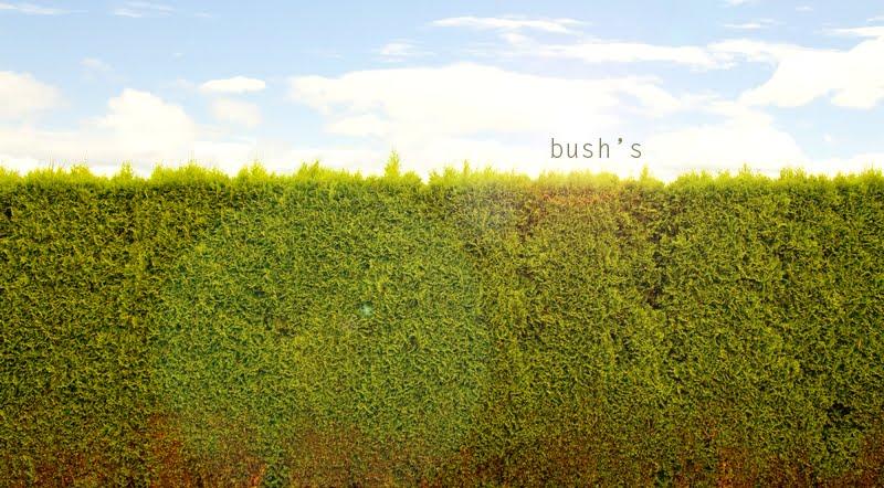 bush's