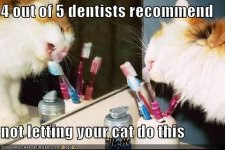 4 out of 5 dentists recommend not letting your cat do this