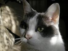 Sweet Elsie