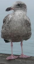 ~*~Proud Seagull~*~