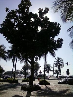 Plantas de interior - Pachira aquatica em Copacabana
