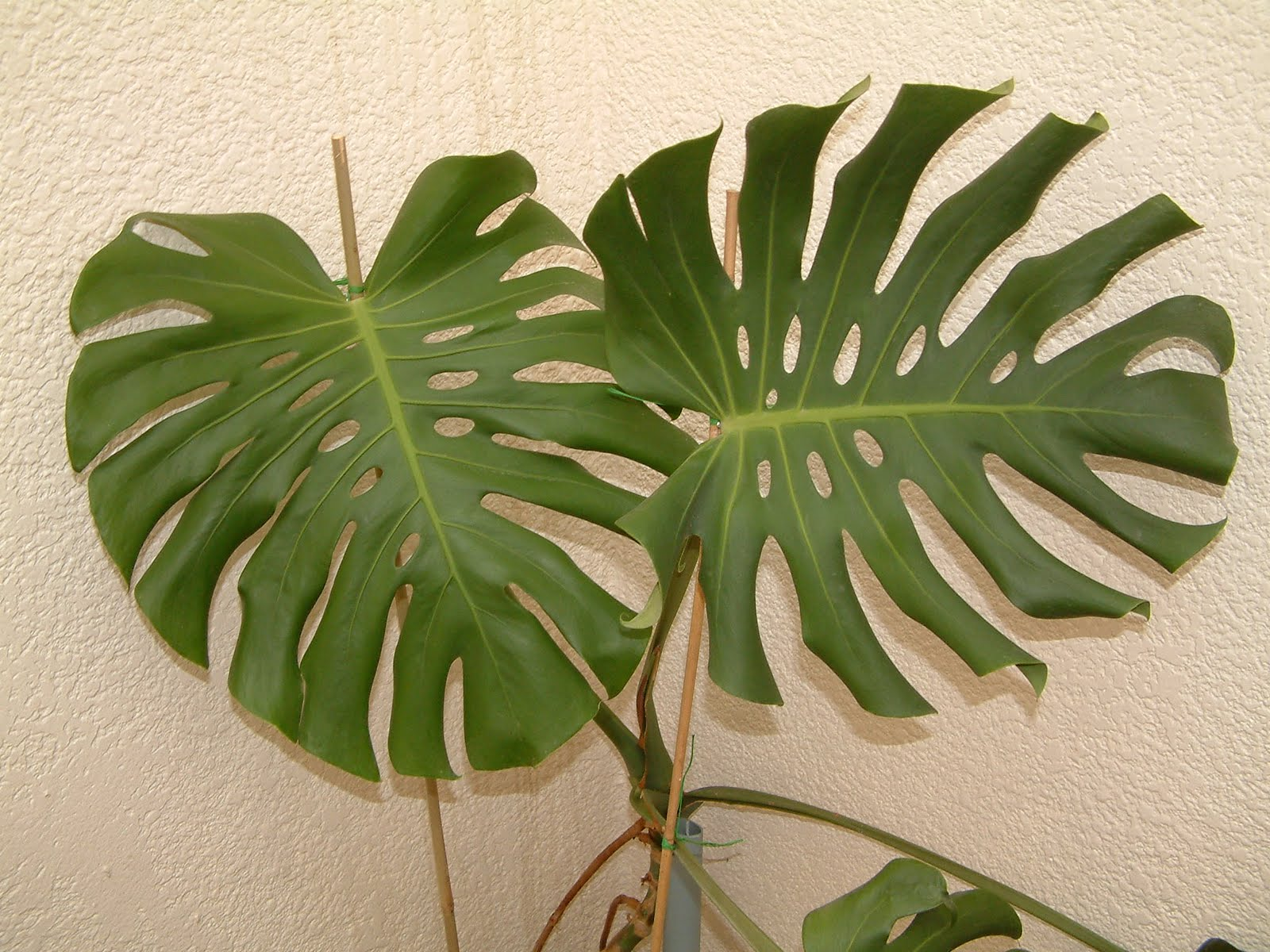 As 10 plantas de interior mais f ceis de cuidar a febre - Plantas de interior comprar ...