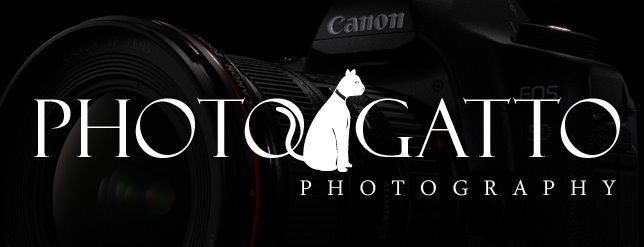 Photo-Gatto