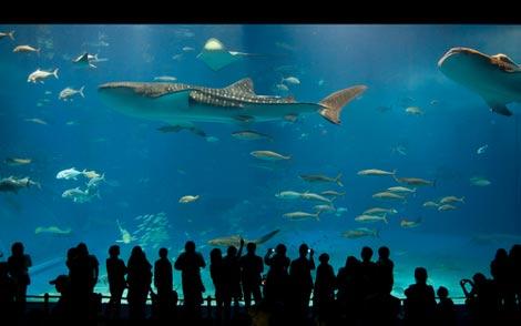 All Pakistan Sites Bigest Aquarium In Japan
