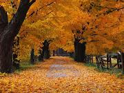 Para mí, el otoño es ocre, es eterna melancolía, lluvia en el cristal, . otoã±o