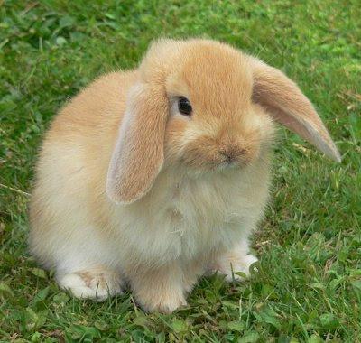 http://3.bp.blogspot.com/_wmw82mgA_X4/STb8a7bDbDI/AAAAAAAAAME/xvmjjcTGBcU/s400/bunny.jpg