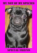 "<a href=""http://thedevildog.blogspot.com/"">Roxy</a>"