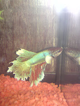 Ikan Baru
