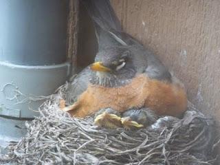 mamma and 2 beaks