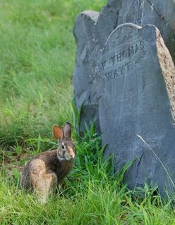 Caitlin GD Hopkins photo of bunny in graveyard
