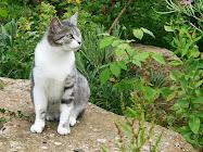 chipie, adoptée en 2005 à l'âge de 1 an et demi, après la mort de Louise