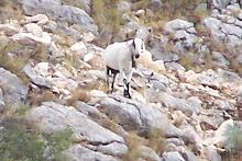 Allá arriba, en la peñas que suben al Puig Campana