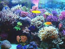 Los corales son seres vivos como las ciudades