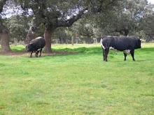 La tierra de tauro