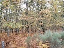Un camino que atraviesa bosques de encinas